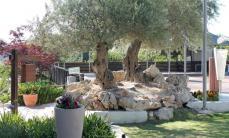 חופשת פסח בירושלים במלון רמת רחל
